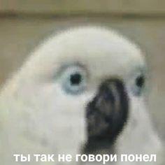 New wallpaper iphone quotes funny lol ideas Stupid Memes, Dankest Memes, Funny Memes, Stupid Pictures, Funny Pictures, Iphone Wallpaper Quotes Funny, Hello Memes, Russian Memes, Cute Love Memes
