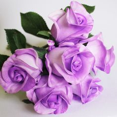 Light Purple Real Touch Roses, Dream Wedding Store Townsville ... Wedding Store, Lavender Roses, Light Purple, Beautiful Flowers, Dream Wedding, Touch, Plants, Pretty Flowers, Plant