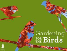 Learn how to attract birds and butterflies to your yard by choosing the right plants!