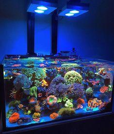 Saltwater Tank, Saltwater Aquarium, Freshwater Aquarium, Aquarium Fish, Aquarium Aquascape, Aquascaping, Coral Reef Aquarium, Aquarium Setup, Coral Reefs