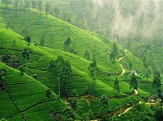 Great news check it out we have launched Amazing Sri Lanka Tour visit us for more info www.travel-rural.com