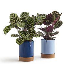 Plantas para dentro de casa (Foto: Selvvva/ Divulgação)