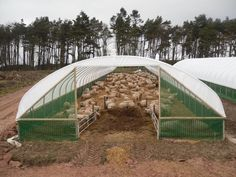 Side Ventilation: Super strong Tensar® wind-break mesh, the strongest available (30kN strength). Fastened to the bottom 1m of the sheep house from the side rail down to ground level. (See Pictures).   eBay!