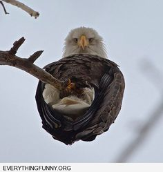 funny an eagle looking down from below