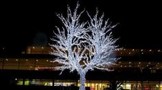 Christmas tree in Duisburg, Germany