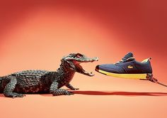 Animals vs Sneakers: Photo Series by Joseph Ford | Inspiration Grid | Design Inspiration
