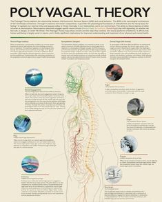 Nerve Anatomy, Brain Connections, Trauma Therapy, Vagus Nerve, Mental Health Resources, Educational Programs, Psychiatry, Brain Health, Homeopathy