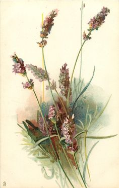 seven sprigs of lavender, signature right half way up card