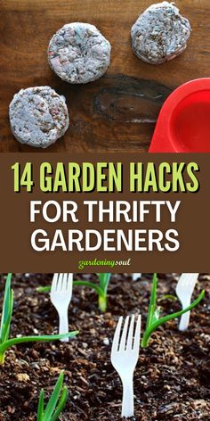 Here are some fun and clever garden hacks to help make your garden more successful. #gardenhacks #gardeninghacks Gardening Hacks, Lots Of Money, Yard Ideas, Some Fun, Clever, Make It Yourself, Plants, Patio Ideas, Courtyard Ideas