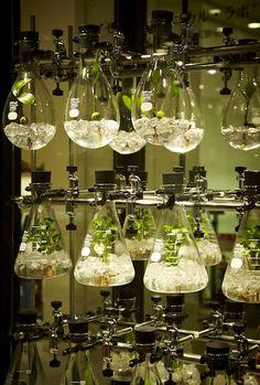 Makoto Azuma for Isetan Botanical Lab Layout Design, Diy Design, Design Ideas, Small Greenhouse Kits, Greenhouse Ideas, Wooden Greenhouses, Magic Garden, Paludarium, Indoor Plants