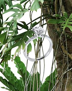 """Inspired by a deep respect for the environment. """"The Fancy Little Dove"""" designed by AGUAdeORO. Respect, Environment, Fair Grounds, Fancy, Deep, Inspired, Inspiration, Design, Diamond"""