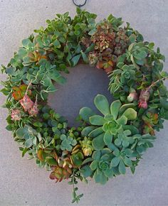 Succulent wreath 13 succulent wedding succulent by Succulentsplus, $89.00