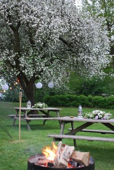 Outdoor wedding in a apple orchard - I really like the picnic table Idea!