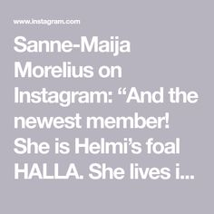"Sanne-Maija Morelius on Instagram: ""And the newest member! She is Helmi's foal HALLA. She lives in a @kisatalli_hulmurinne farm. . Ja tässä on Helmin tammavarsa HALLA. Hän on…"" Hobby Horse, Halle, Instagram, Hall"