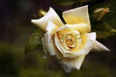 Yellow Rose Vintage #microstockphotographs #microstockphotowebsite #microstockphotography #microstockphotowebsites #marketingonline #microstock #marketing #webdesign #design #designaneolife #ecommerceur #fastudio #SEO #web20 #job #csstemplates #css #html #html5 #html5css3