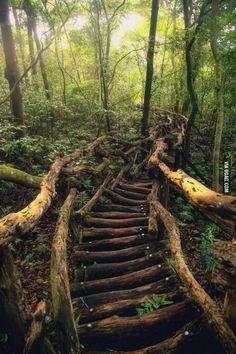 The Serpentine Path, Taiwan
