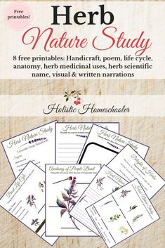 Looking for winter nature study options? Interested in a herb nature study? Grow herbs in your window sill and enjoy an herb nature study. Science Projects For Kids, Science For Kids, Science Activities, Science Nature, Theme Nature, Nature Nature, Nature Crafts, Kindergarten, Nature Journal