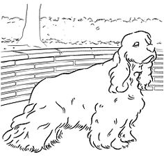 childrens coloring pages springer spaniel | Cocker Spaniel Coloring Page | Learning, Dog and Craft
