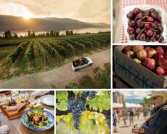 Things to do in Kelowna – Tips from a bartender Things To Do In Kelowna, Bartender, Farmers Market, Night Life, Stuff To Do, Table Decorations, Tips, Interview, Canada