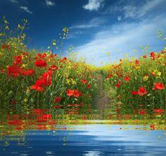 Haja água e flores