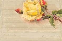 Digital collage ~ torn paper texture, recipe card & Catherine Klein rose
