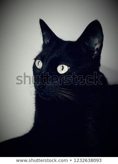 Find Black Cat Vision stock images in HD and millions of other royalty-free stock photos, illustrations and vectors in the Shutterstock collection. Thousands of new, high-quality pictures added every day. Image Categories, Image Sharing, Original Image, New Pictures, Large Prints, Royalty Free Photos, High Quality Images, Your Image