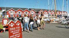 Masser af liv på Skagen havn en sommerdag