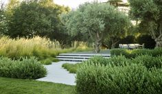 Low shrubs enclosed entrance to a grassland entertainment space Landscape Architecture, Landscape Design, Garden Design, Landscaping Around Trees, Backyard Landscaping, Back Gardens, Outdoor Gardens, Coldwater Gardens, Haus Am See