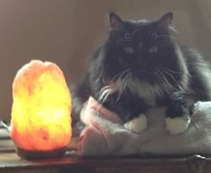 Salt Lamps Toxic To Cats : 1000+ images about Himalayan Salt lamps on Pinterest Himalayan Salt Lamp, Himalayan Salt and ...