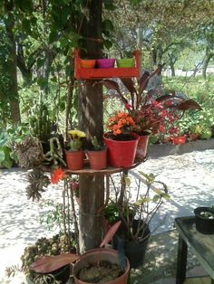 Plants, Flowers, Plant, Planets