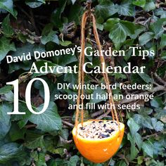 David Domoney's Garden Tips Advent Calendar Day 10