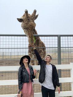 Malibu Wine Safari and Beer Garden Malibu Wine Safari, Malibu Wines, Beer Garden, Giraffe, Felt Giraffe, Giraffes