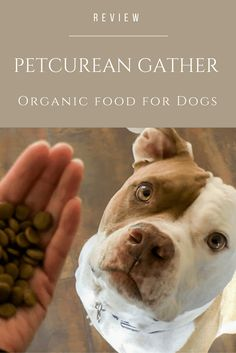 Even dogs can eat food with certified, organic, non-GMO and sustainably produced ingredients. Here's how.