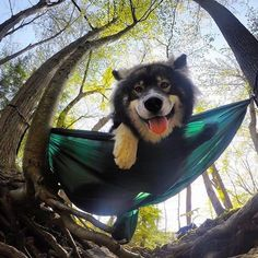 Hanging on to the weekend! #campingwithdogs @indus_the_wolfdog