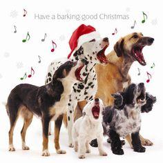 Online Xmas dog show to raise money for Service Dogs Uk!   www.facebook.com/christmasdogshow