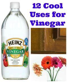 12 Cool Uses for Vinegar