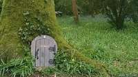 Wayford Woods, Somerset- a fairt forest!