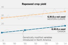 About 20 years ago, the United States and Canada began introducing genetic modifications in agriculture. Europe did not embrace the technology, yet it achieved increases in yield and decreases in pesticide use on a par with, or even better than, the United States, where genetically modified crops are widely grown.