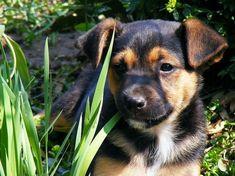 Kutyáknak/kutyákra mérgező növények - gazigazito.hu Labrador Retriever, Dogs, Animals, Animais, Labrador Retrievers, Animales, Animaux, Doggies, Animal Books
