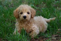 Schnoodle... i want it!!!!
