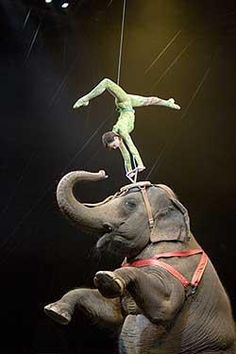 An aerial acrobat combines his talents with an elephant.Ringling Bros.,Barnum & Bailey Circus