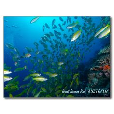 This postcard features schools of tropical fish on Australia's Great Barrier Reef.