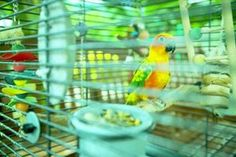 The Best Way to Arrange Perches in a Parakeet Cage thumbnail