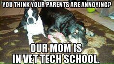 Vet tech school