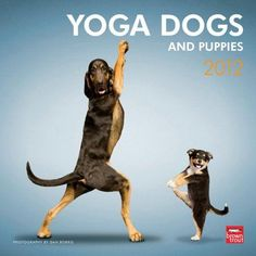 Yoga Dogs - and puppies let's shake///~///~/~~~