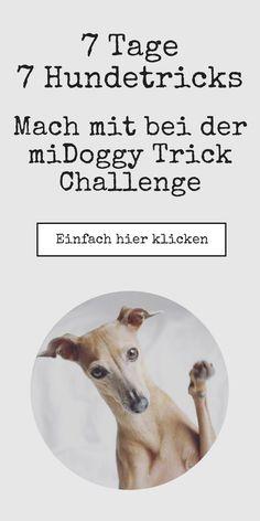 Mit diesen genialen Ideen wird deinem Hund bestimmt nicht mehr langweilig und du kannst ihn verantwortungsvoll auslasten.
