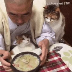 Video Cats want to eat too Happy Animals, Animals And Pets, Funny Animals, Cute Animals, Cute Cat Gif, Cute Cats, Best Cat Gifs, Cats And Cucumbers, Scared Cat