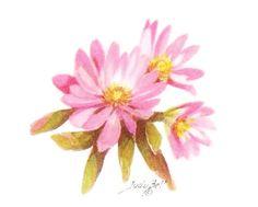 Bitterroot  Pink Wildflower Watercolor by judithbelloriginals, $22.00