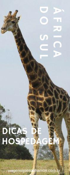 Dicas de hospedagem em um roteiro completo pela África do Sul #AfricaDoSul #GardenRoute #Africacomcrianca Above Ground Pool Decks, In Ground Pools, Port Elizabeth, Luxury Garden Furniture, Lush Lawn, Garden Route, Vegetable Garden Design, Extreme Weather, Outdoor Settings