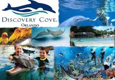 Discovery Cove - Awesome experience. I loved it. One of the coolest experiences ever. Staff was so friendly, food was super good (and it was all you could eat), got to ride with a dolphin, and swim with exotic fish. I loved the the feeling of being on a resort, and it was affordable! I want to go back